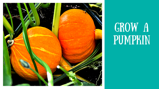 Fall Experiments and Projects | Grow a Pumpkin