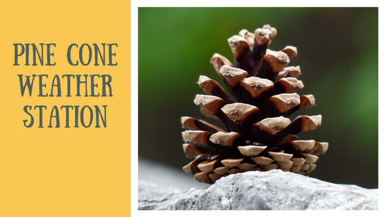 Fall Experiments and Projects | Pine Cone Weather Station